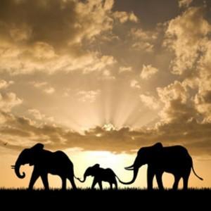 Hathi e la caccia del secolo